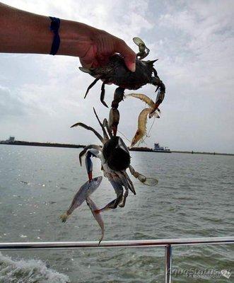 Фотографии необычных водных обитателей - 1502552102_subbotnyaya-3.jpeg