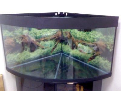 Нужно привести в порядок заброшенный аквариум  - IMG_0045.JPG