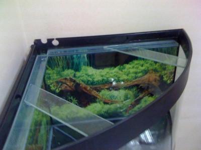 Нужно привести в порядок заброшенный аквариум  - IMG_0047.JPG