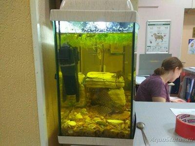 Перезапуск аквариума - 1503490388.jpg