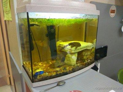 Перезапуск аквариума - 1503490397.jpg