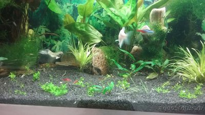 Мой аквариум 110 литров yulia211  - 1505327161311397345685.jpg