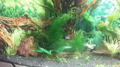 Мой аквариум 110 литров yulia211  - 1505327178484-256351022.jpg
