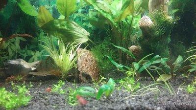 Мой аквариум 110 литров yulia211  - 15053272027061348396506.jpg
