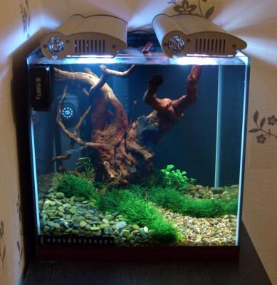 Пресноводный мини аквариум на 30 литров Roman  - cr1.jpg