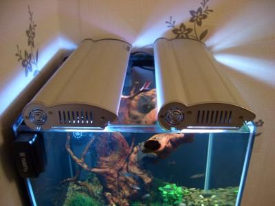Пресноводный мини аквариум на 30 литров Roman  - cr2.jpg