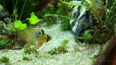 Фото аквариумных рыбок - WP_20171001_19_39_04_Pro.jpg