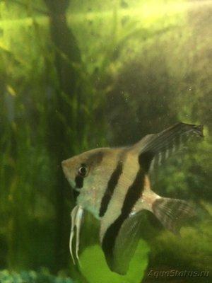 Рыба раз - 0C1C9375-877B-480F-AA72-D59AA6E13D5C.jpeg