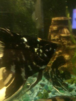 Рыба два - E43002B0-525C-4011-9B8C-7B0243243FF4.jpeg