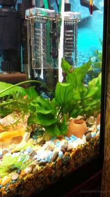 Опознание аквариумных растений - 4CB7598E-8B41-45B8-9887-1EAF7B226E41.jpeg