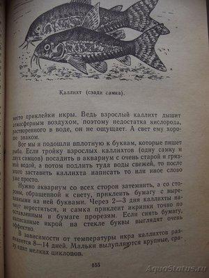 Мой аквариум 110 литров yulia211  - DSCF1861.JPG