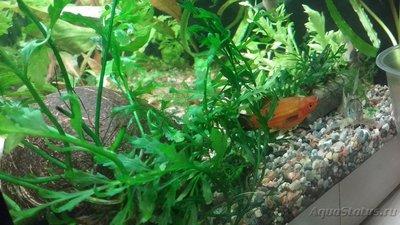 Мой аквариум 110 литров yulia211  - 1508960103271-1438927128.jpg