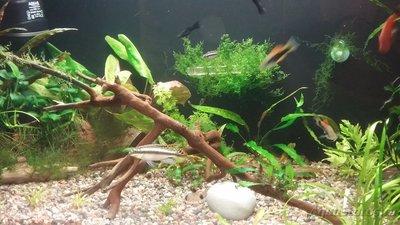 Мой аквариум 110 литров yulia211  - 1508960212885821447623.jpg
