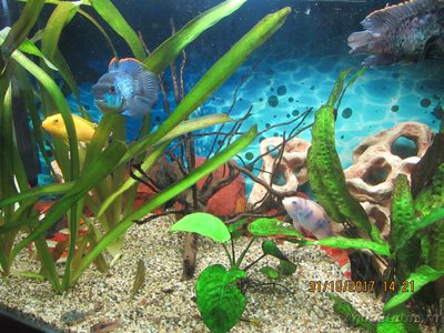 Продам аквариум с тумбой 143 л Коломна  - IMG_2007.JPG