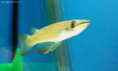 Помогите опознать рыбку опознание рыб  - IMAG0089_1.jpg