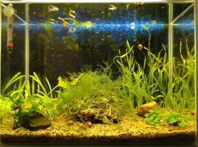 Мой аквариум 35 литров Студентка  - 017.jpg