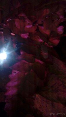 Аквариумные растения - опознание растений. - 20171118_144400.jpg