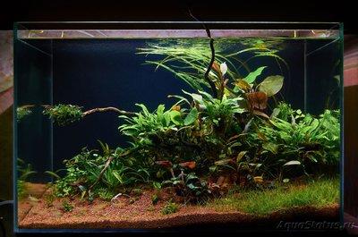 Запуск аквариума с питательным субстратом 90 литров (acidant)