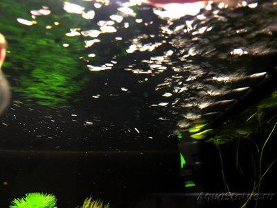 Мой аквариум и его обитатели, 70 литров Бошетунмай  - IMG_1993.JPG
