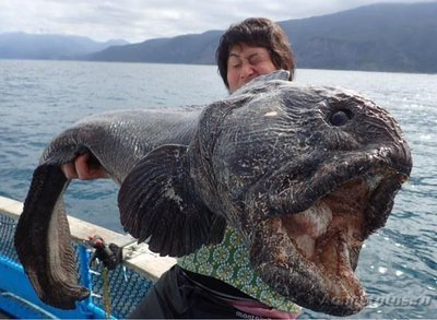 Помогите опознать рыбку опознание рыб  - 203149343_e98cae2466fcb7de5c30bc9a64e6370e_800.jpg