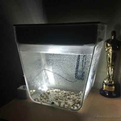 Мини аквариум для новичков - AF181970-0956-4FA4-9C58-2D46650842C3.jpeg