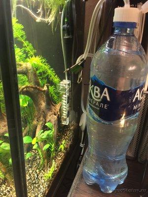 Самый простой источник СО2 в аквариуме - IMG_2038.JPG