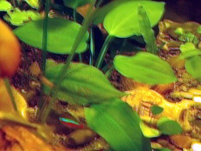 На листьях растений начали появляться темные пятна - .jpg