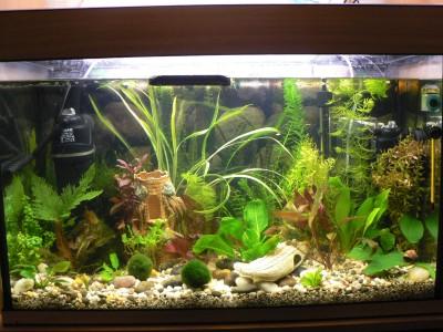 Наш аквариум 80 литров Михаил и ИринаС  - P1080102.JPG