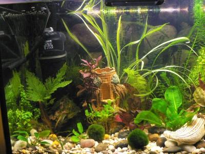 Наш аквариум 80 литров Михаил и ИринаС  - P1080107.JPG