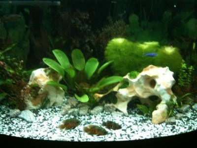 Мой аквариум 300 литров Grafova  - IMG_0031.JPG