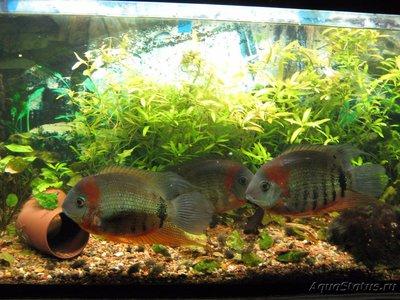 Светодиодные прожекторы для аквариума - IMG_2302.JPG