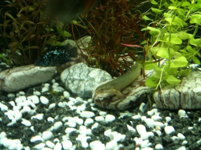 Мой аквариум 300 литров Grafova  - 3.jpg