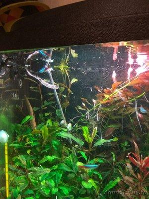 Выбор внешнего фильтра для аквариума. Какой выбрать внешний фильтр? - IMG_20180112_192555.jpg