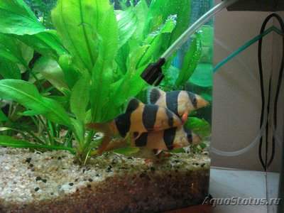 Карантин рыб в аквариуме - DSC05316.JPG