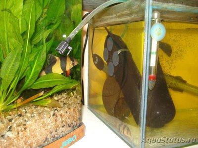 Карантин рыб в аквариуме - DSC05317.JPG