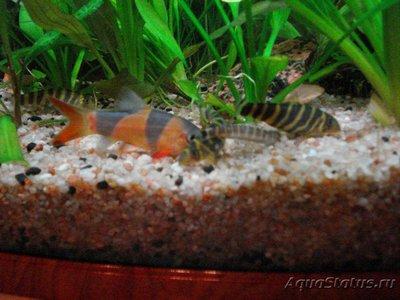 Карантин рыб в аквариуме - DSC04663.JPG