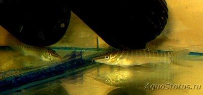 Карантин рыб в аквариуме - DSC07016b.jpg