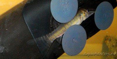 Карантин рыб в аквариуме - DSC07022b.jpg