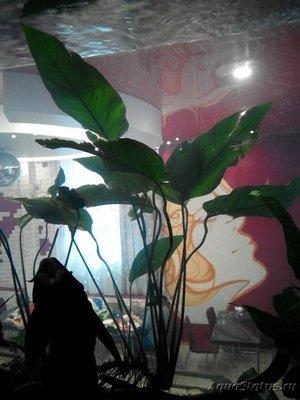 Аквариумные растения - опознание растений. - IMG-76b188e548ea44bda411ed8cc321b0a4-V.jpg