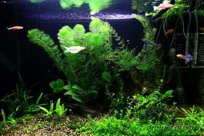 Лампы для аквариума Т8 18000К - 001.JPG