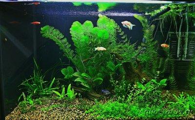Лампы для аквариума Т8 18000К - 003.JPG