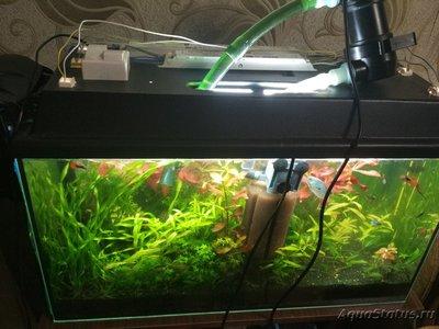 Цветение воды, зеленая вода, позеленела аквариум - 1.jpg