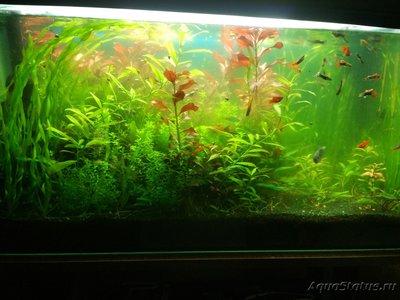 Цветение воды, зеленая вода, позеленела аквариум - G4A3zqm0Ovc.jpg