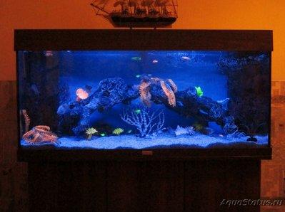 Декоративная подсветка аквариума без живых растений своими руками - IMG_0448 (2).JPG