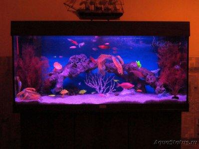 Декоративная подсветка аквариума без живых растений своими руками - IMG_0450 (2).JPG