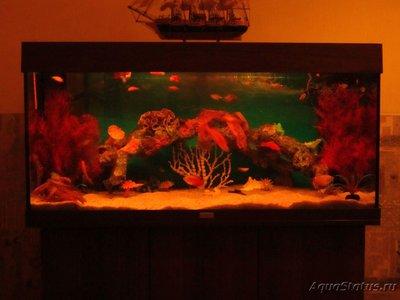 Декоративная подсветка аквариума без живых растений своими руками - IMG_0453 (2).JPG