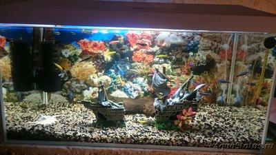 Почему умерла рыбка или гибнут рыбки в аквариуме? - 15180344465981274694808.jpg