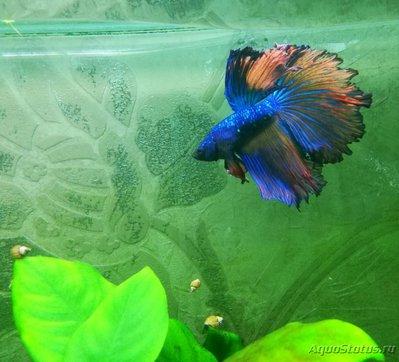 Фото аквариумных рыбок - IMG_20180208_095822.jpg