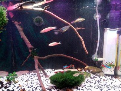 Задний фон для аквариума - 1518970669036657114154.jpg
