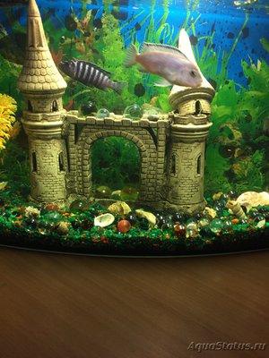 Помогите опознать рыб - IMG_3145.JPG